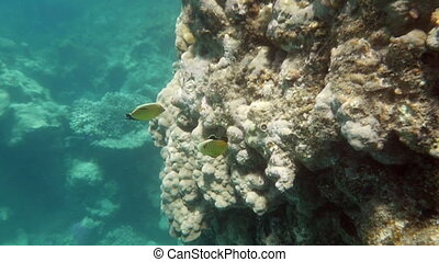 Coral Reef and Tropical Fishes Lit with the Sun - Slow...