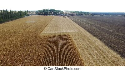 Natures Field corn, aerial shot - Nature background in...