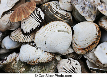 White large shell - White large shell is photographed close...