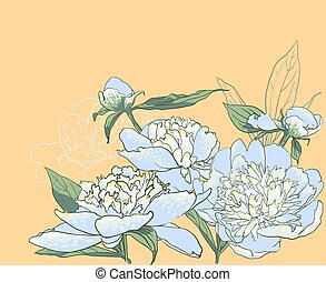 Peony flowers vector llustration - Peony flowers. vector...