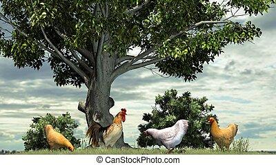 Pollos, gallo