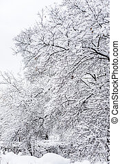 Too much snow - Winter park with snow-covered trees after a...
