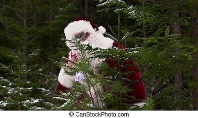 Santa Claus is hiding behind  fir