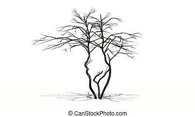 lemon tree winter - lemon trees winter - isolated on white...