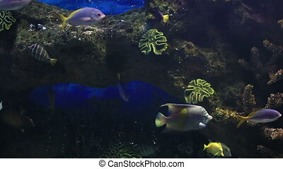 Beautifully decorated saltwater aquarium with fish -...