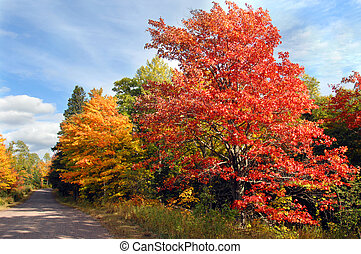 Curving Country Michigan Lane - Vivid red maple tree stands...
