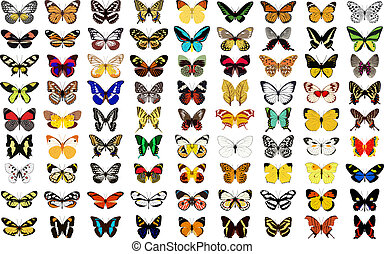 butterfly - vector butterfly with white background.