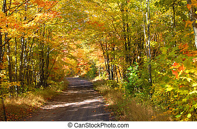 Autumn Backroad in Michigan - Dirt lane meaders through...