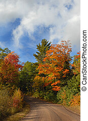 Rural Michigan - Dirt lane disappears into Autumn foliage on...