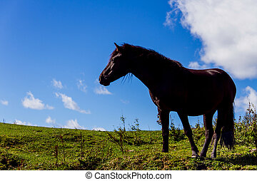 Black mountain horse - Black strong mountain horse on the...