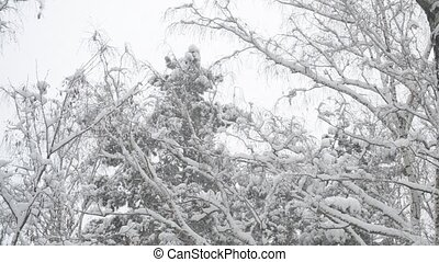 Snow falling on background of tops of trees swaying in wind