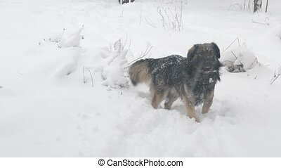 Mongrel dog walks through snowdrift - Active playful...
