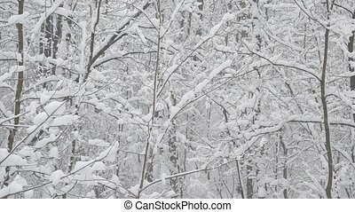 Snow falling on background of leafless deciduous trees -...
