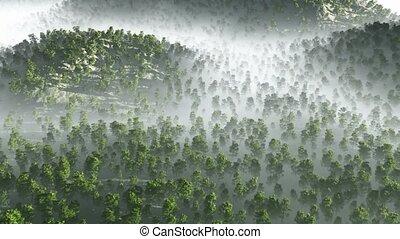 morning fog in dense tropical rainforest aerial