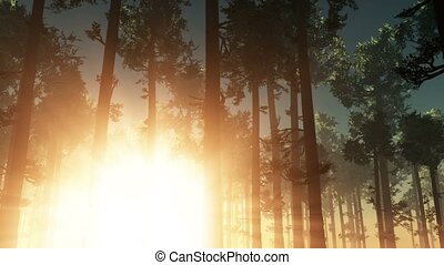 A beautiful morning with sunrays shining through the forest...