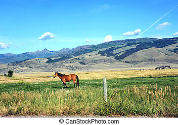 Farming in Paradise Valley - Truck approaches horse standing...