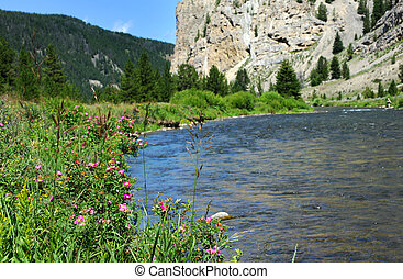Flyfishing in Montana - Scenic Gallatin river, on Highway...