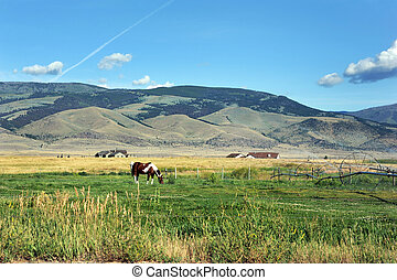 Irrigating Farm Land - Horse ignores irrigation system as it...
