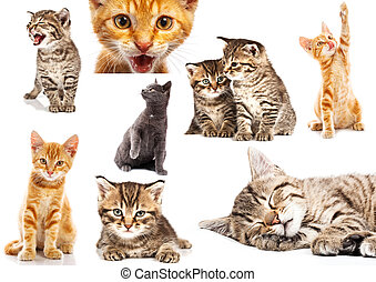 Set of cat isolated