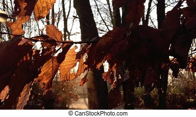 Dry Autumn Leaves and Sunlight in Nature