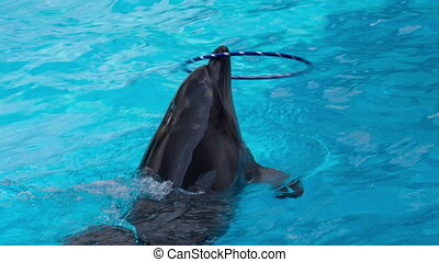 Dolphin Spins Hulahup on the Nose
