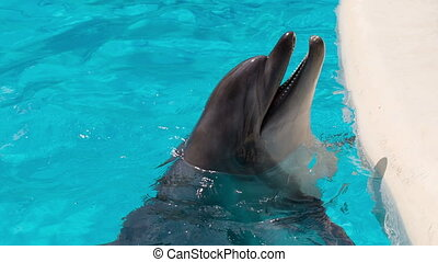 Happy Dolphin in the Pool - cheerful dolphin in the...