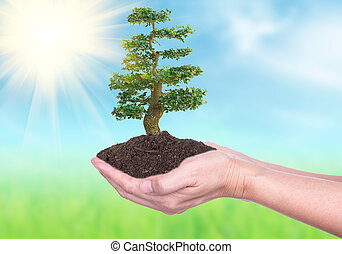Growth - Human hands holding large trees growing in soil on...