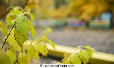 Bench in The Park in Autumn. Translation Focus