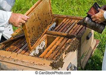 Beehive 2 - A close-up of the beehive. Two beekeepers work...