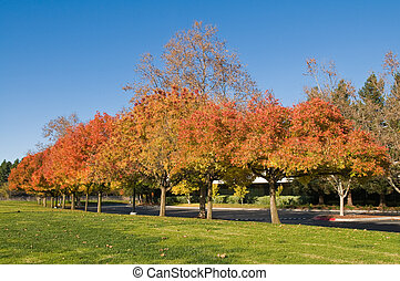 Autumn colors in a Silicon Valley Office Park, Sunnyvale,...