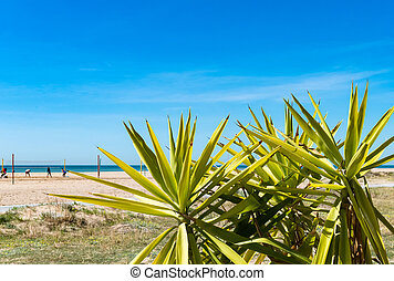 Beach on blue Mediterranean sea with green yucca palm...