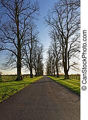 Oaks Lining a Country Lane in Winter