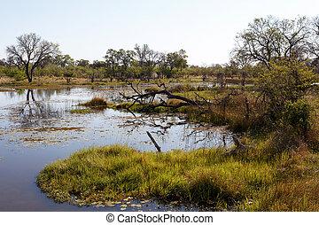 landscape in the Okavango swamps - beautiful landscape in...