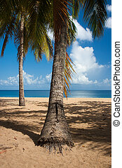 Beach of Grande Anse, Deshaies, Guadeloupe island