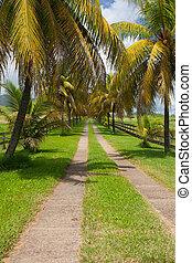 Palm road on the banana plantation, Guadeloupe island