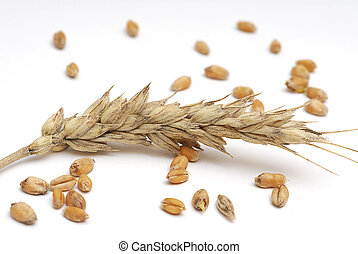 Wheet - Wheat and seeds studio isolated on white background