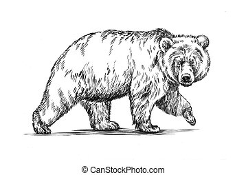 black and white engrave isolated bear - black and white...