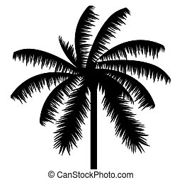 Palm tree against white background.