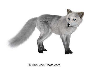 Arctic Fox on White - 3D digital render of an arctic fox...