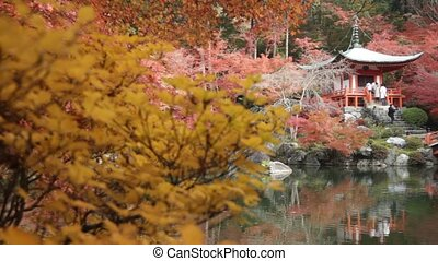 Autumn season,The leave change color of red in Temple japan...