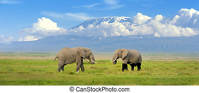 Elephant with Mount Kilimanjaro in the background