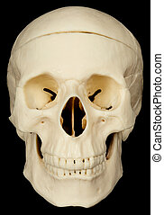 Skull on black background - Human skull on black background...