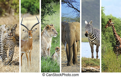 African animals - Collage with photo african animals