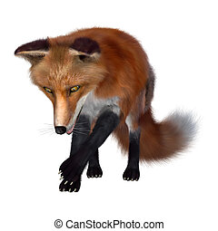 Red Fox on White - 3D digital render of a red fox isolated...