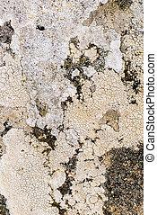Lichen close up - Mixed growth of lichen viewed close up