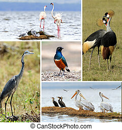 African animal collage - Five african birds. Grey Crowned...