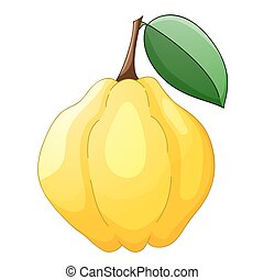 Quince isolated on a white background