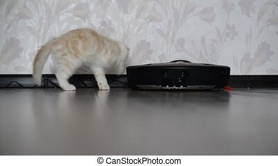 kitten plays with a robot vacuum cleaner - The kitten plays...