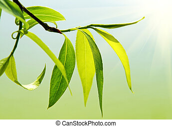 fresco, verde, Arriba, follaje, cierre