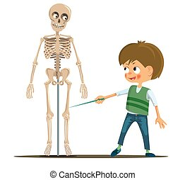 Boy in the classroom studying the human skeleton Vector...